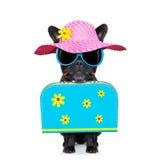 Dog on summer  holiday vacation Stock Photos