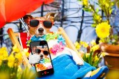 Dog summer holiday vacation on hammock stock photo
