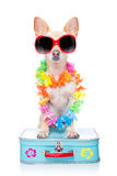 Dog summer holidays Stock Images