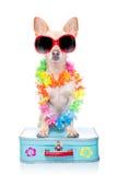 Dog summer holidays Stock Images