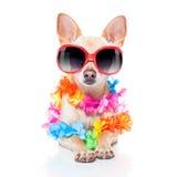 Dog summer holidays Stock Photography