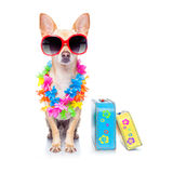 Dog summer holidays Royalty Free Stock Images