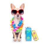 Dog summer holidays Royalty Free Stock Images