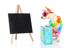 Dog summer holidays Royalty Free Stock Photography