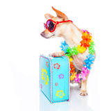 Dog summer holidays Royalty Free Stock Photos