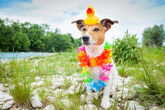 Dog  summer holidays Stock Photo