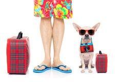 Dog summer vacation Royalty Free Stock Photos