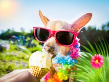 Free Dog  Summer Vacation   Licking Ice Cream Stock Photo - 190794890