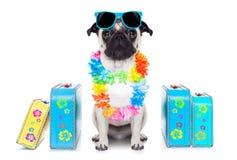 Dog summer  vacation Royalty Free Stock Photo
