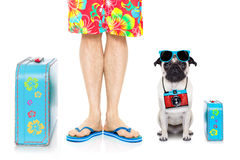 Dog summer vacation royalty free stock images