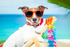 Dog summer vacation Royalty Free Stock Photography