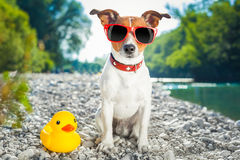 Dog summer vacation Stock Image