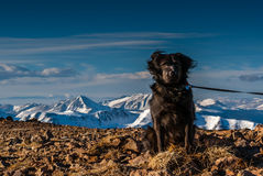 Dog on the Summit royalty free stock images