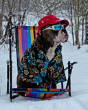 A dog in a sun chair in snow Stock Photo