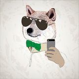 Dog in sun glasses with a bow taking selfie Stock Photography
