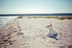 Dog. Sun lightndog on a beach Royalty Free Stock Photos