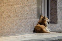 A dog in the sun Stock Photos