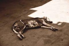 Dog in sun Stock Photos