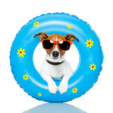 Dog sunbathing. With air mattress stock photos