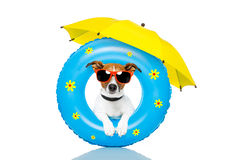 Dog sunbathing with  air mattress. And an umbrella Royalty Free Stock Photography