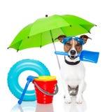 Dog sunbathing with air mattress. Dog sunbathing with  air mattress, shovel and bucket and rake and goggles Royalty Free Stock Photos