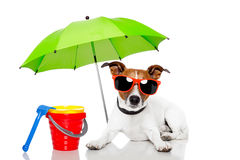 Dog sunbathing with umbrella. Dog sunbathing with , shovel, , bucket ,rake and umbrella Royalty Free Stock Images