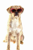Dog with sunglasses Stock Photo