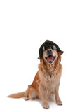 Dog with sunglasses and hat Royalty Free Stock Photography