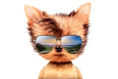 Dog in sunglasses isolated on white background. Funny adorable dog wearing sunglasses isolated on white background. Holiday and vacation concept. Realistic 3D Royalty Free Stock Photography