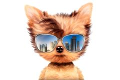 Dog in sunglasses isolated on white background. Funny adorable dog wearing sunglasses isolated on white background. Holiday and vacation concept. Realistic 3D royalty free illustration