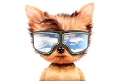 Dog in sunglasses isolated on white background. Funny adorable dog wearing aviator mask isolated on white background. Holiday and vacation concept. Realistic 3D vector illustration