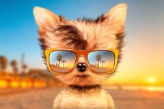 Dog in sunglasses stand in front travel background. Funny adorable dog wearing sunglasses and stand in front travel background. Holiday and vacation concept Royalty Free Stock Photos