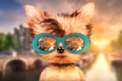 Dog in sunglasses stand in front travel background. Funny adorable dog wearing sunglasses and stand in front travel background. Holiday and vacation concept Stock Photography