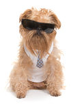 Dog with sunglasses Royalty Free Stock Photography