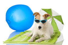 Dog with sunglasses Stock Photos