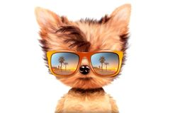 Dog in sunglasses  on white background. Funny adorable dog wearing sunglasses  on white background. Holiday and vacation concept. Realistic 3D illustration Royalty Free Stock Photography