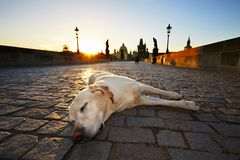 Dog at the sunrise Royalty Free Stock Photos
