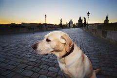 Dog at the sunrise Royalty Free Stock Photo