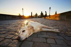 Dog at the sunrise Stock Photos