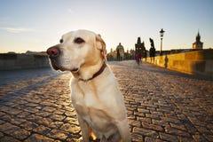 Dog at the sunrise Stock Photography