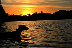 Dog and sunse Stock Photo