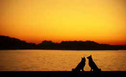 Dog at sunset Royalty Free Stock Image