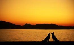 Dog at sunset Royalty Free Stock Image