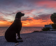 Dog in the Sunset  Curacao Views Royalty Free Stock Photo