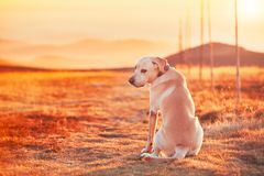 Dog at the sunset Royalty Free Stock Image