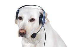 Dog support operator Stock Photography