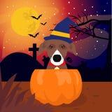 Dog suprise pumpkin halloween scary. Dog suprise pumpkin halloween isolated design special halloween day format suport file eps 10. thankyou for downloading royalty free illustration