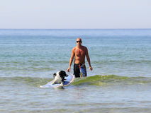 Dog surf Stock Images