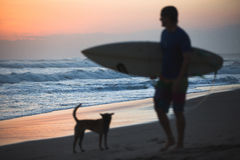 Dog and Surfer Stock Photo