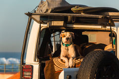 Dog Surfers Car Beach Stock Photo